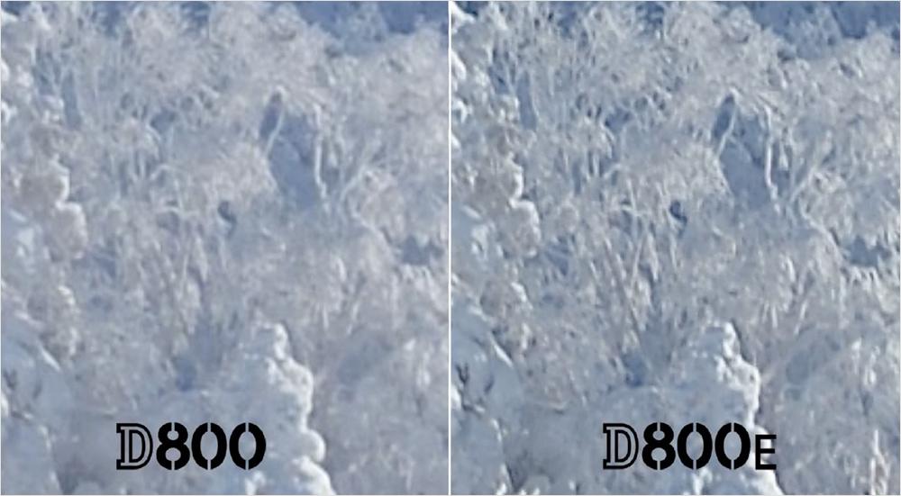 nikon-d800-versus-d800e.jpg