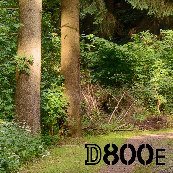 100% Crop - Nikon D800E Micro-Nikkor AiS 2.8/55mm