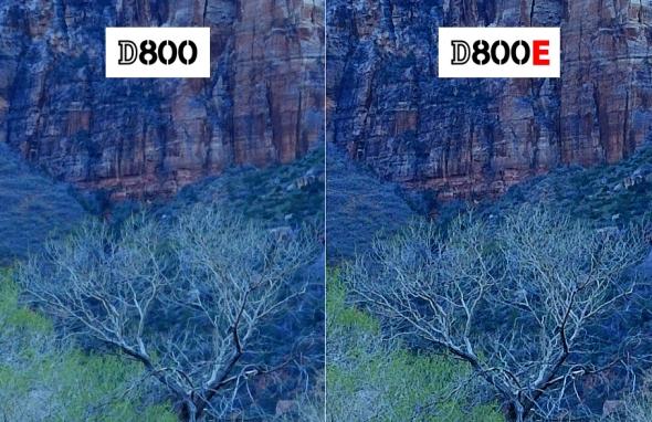 Nikon D800 versus Nikon D800E