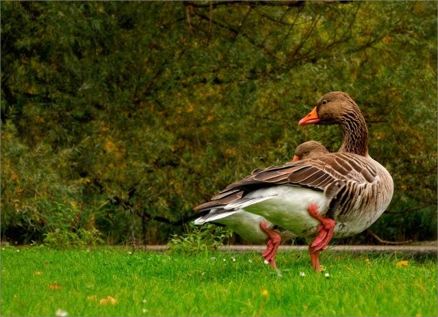 Beispielfoto - Sample Picture - Nikon P7100