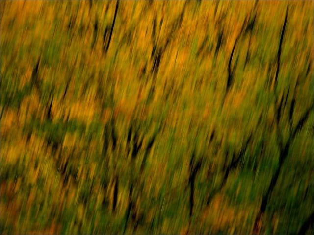 Sample Picture - Beispielfoto - Nikon P7100