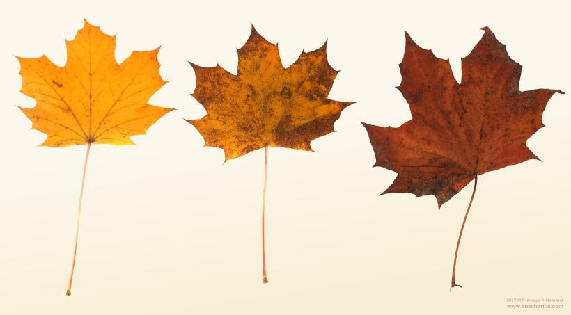 Herbstlaub auf dem Scanner