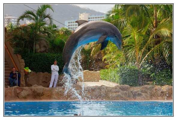 Loro Parque - Tenerife