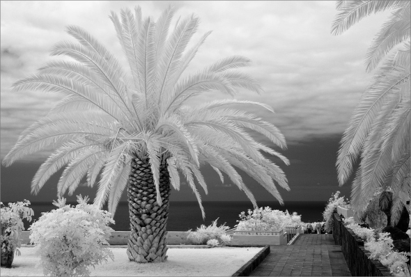Nikon D300 - Infrared 830nm - Nikkor AF-S VR 3.5-5.6/18-55mm
