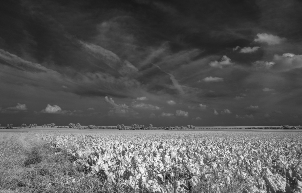 Nikon D300 - Infrared 830nm - Infrarot